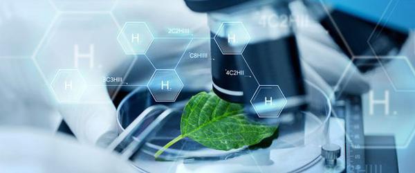 Cath Lab Services Market 2019 Analyse mondiale, Recherche, Examen, Applications et Prévisions jusqu'en 2021